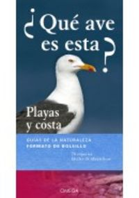 ¿QUE AVE ES ESTA? - PLAYAS Y COSTA