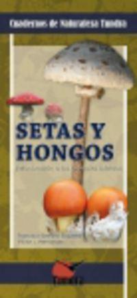 SETAS Y HONGOS