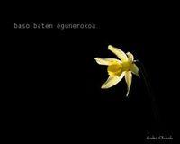 BASO BATEN EGUNEROKOA = DIARIO DE UN BOSQUE