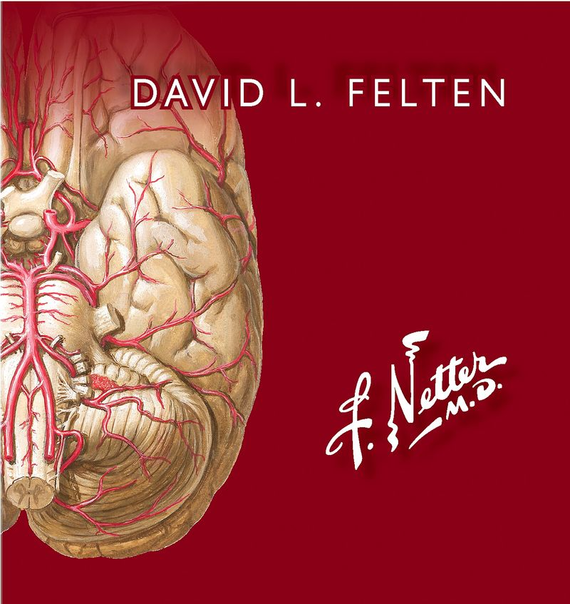 (3 ED) NETTER - FLASHCARDS DE NEUROCIENCIA