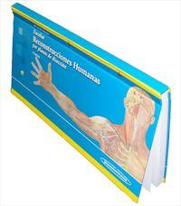 Escolar - Reconstrucciones Humanas Por Planos De Diseccion (5ª Ed. ) - Jose Smith-agreda