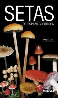SETAS DE ESPAÑA Y DE EUROPA